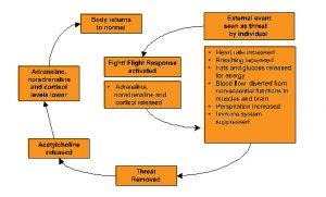 Stress Response - Simple Diagram